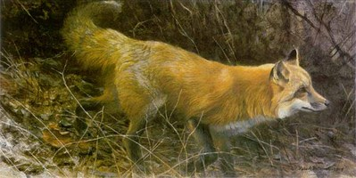 On The Move – Red Fox- Signed By The Artist – PaperLithograph – Limited Edition – 950S/N – 11 7/8x23 1/2
