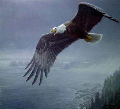 On The Wing – Bald Eagle- Signed By The Artist – PaperLithograph – Limited Edition – 950S/N – 22 1/2x25 1/4