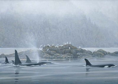 Orca Procession- Signed By The Artist								 – Canvas Giclee – Limited Edition – A/P – 33 x 46 –