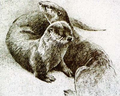 Otter Pair- Signed By The Artist – PaperLithograph – Limited Edition – 290S/N – 7 3/4x9 3/4
