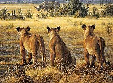 Passing Fancy – Lion Cubs And Rhino- Signed By The Artist – PaperLithograph – Limited Edition – 450S/N – 16 5/8x22 3/8 –