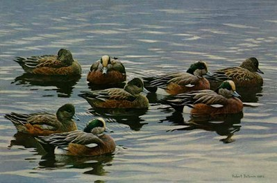 Peaceful Flock – American Wigeon – Companion Edition- Signed By The Artist – PaperLithograph – Limited Edition – 425S/N – 13x19 3/4