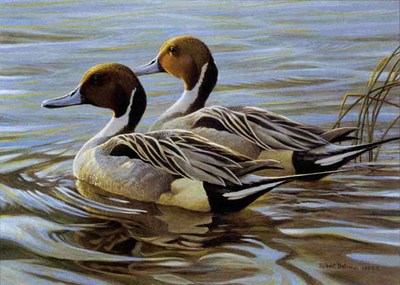 Pintails In Spring – Executive Edition- Signed By The Artist								 – Paper Lithograph – Limited Edition – 532 S/N – 6 1/2 x 9
