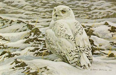 Plowed Field – Snowy Owl- Signed By The Artist – PaperLithograph – Limited Edition – 950S/N – 9 1/2x14 1/4