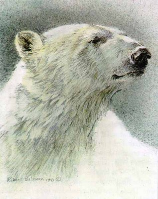 Predator Portfolio – Polar Bears (Set Of 3)- Signed By The Artist – PaperLithograph – Limited Edition – 76A/P – 7 7/8x9 3/4