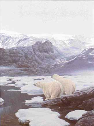 Polar Bears At Baffin Island- Signed By The Artist – PaperLithograph – Limited Edition – 950S/N – 27 1/4x20