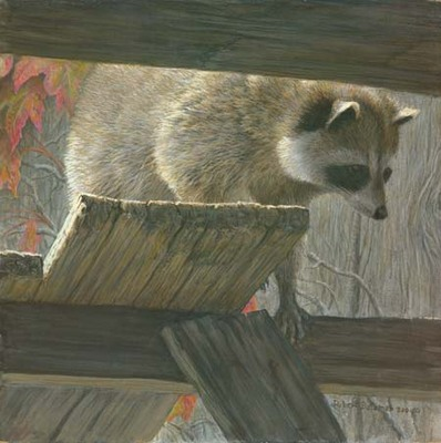 The Prowler – Raccoon- Signed By The Artist – PaperLithograph – Limited Edition – 76A/P – 12x12 –