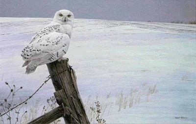 Ready For The Hunt – Snowy Owl- Signed By The Artist – PaperLithograph – Limited Edition – 950S/N – 20x31 1/2