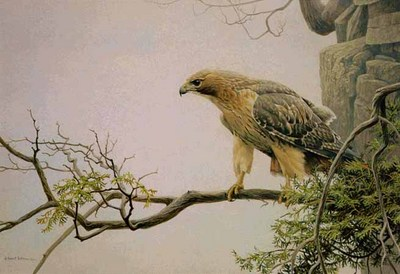 Red-Tailed Hawk By The Cliff- Signed By The Artist								 – Paper Lithograph – Limited Edition – 950 S/N – 20 x 29 1/2