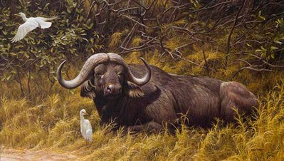 Resting Place – Cape Buffalo- Signed By The Artist – PaperLithograph – Limited Edition – 950S/N – 19 1/2x33 1/2