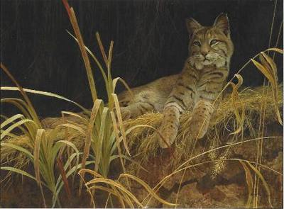 Riverbank Retreat – Bobcat- Signed By The Artist – CanvasLithograph – Limited Edition – 350S/N – 17x23