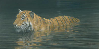 River Ford – Tiger- Signed By The Artist – CanvasGiclee – Limited Edition – 195S/N – 24x48