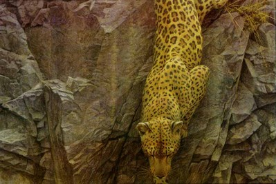 Rockface Descent- Signed By The Artist – CanvasGiclee – Limited Edition – 180S/N – 24x36