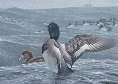 Rolling Waves – Greater Scaup- Signed By The Artist								 – Paper Lithograph – Limited Edition – S/N – 6 1/2 x 9