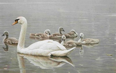 Royal Family – Mute Swans- Signed By The Artist – PaperLithograph – Limited Edition – 56A/P – 20x32 3/4