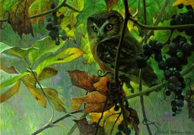 Saw-Whet Owl And Wild Grapes- Signed By The Artist								 – Paper Lithograph – Limited Edition – 950 S/N – 8 7/8 x 12 1/2