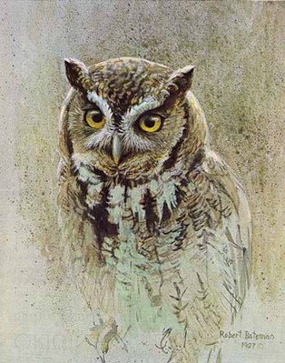 Screech Owl Study- Signed By The Artist – PaperLithograph – Limited Edition – 950S/N – 9 3/4x7 3/4