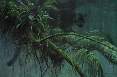 Shadow Of The Rainforest – Premier Edition- Signed By The Artist – PaperLithograph – Limited Edition – 450S/N – 21 5/8x32 3/8 –