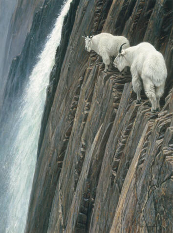 Sheer Drop – Mountain Goats- Signed By The Artist – CanvasGiclee – Limited Edition – 70A/P – 40x30