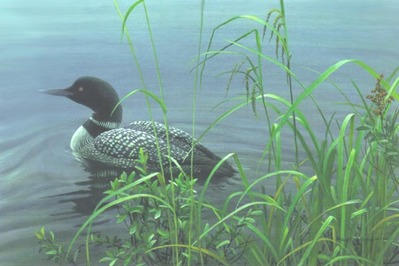 Shoreline – Common Loon- Signed By The Artist – PaperLithograph – Limited Edition – 76A/P – 12x18 –