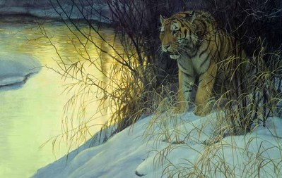 Siberian Tiger- Signed By The Artist								 – Paper Lithograph – Limited Edition – 4500 S/N – 21 5/8 x 32 1/2