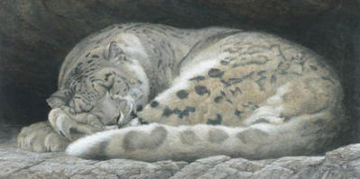 Sleeping – Snow Leopard- Signed By The Artist – PaperLithograph – Limited Edition – 950S/N – 16 1/4x32 1/2