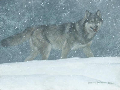 Snowfall – Wolf- Signed By The Artist								 – Canvas Giclee – Limited Edition – A/P – 12 x 16
