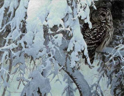 Snowy Hemlock – Barred Owl- Signed By The Artist								 – Paper Lithograph – Limited Edition – 56 A/P – 20 x 27 1/4