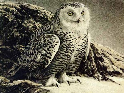 Snowy Owl- Signed By The Artist – PaperLithograph – Limited Edition – 150S/N – 9x12 –