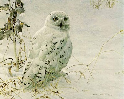 Snowy Owl And Milkweed- Signed By The Artist – PaperLithograph – Limited Edition – 950S/N – 15 3/4x19 1/2