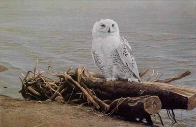 Snowy Owl On Driftwood- Signed By The Artist – PaperLithograph – Limited Edition – 950S/N – 19x27 1/2