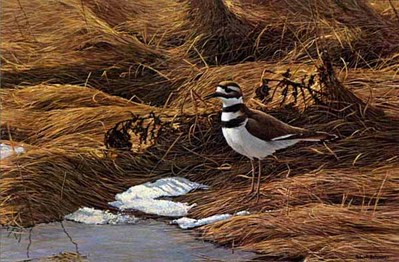 Spring Thaw – Killdeer- Signed By The Artist – PaperLithograph – Limited Edition – 950S/N – 11x17 1/2