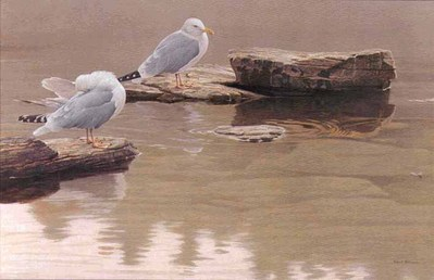 Still Morning – Herring Gulls- Signed By The Artist – PaperLithograph – Limited Edition – 950S/N – 18 1/4x27
