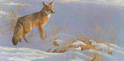 Swift Fox- Signed By The Artist – PaperLithograph – Limited Edition – 950S/N – 10 1/2x20