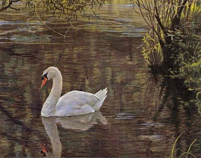 Sylvan Stream – Mute Swan- Signed By The Artist – PaperLithograph – Limited Edition – 20P/P – 6 3/4x8 1/2