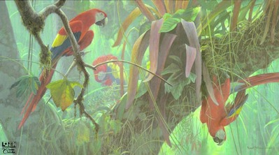 Tropical Canopy – Scarlet Macaws- Signed By The Artist – PaperLithograph – Limited Edition – 550S/N – 17 1/4x31