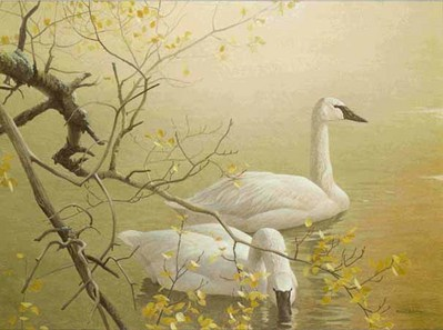 Trumpeter Swans And Aspen- Signed By The Artist – PaperLithograph – Limited Edition – 950S/N – 20x26 3/4 –