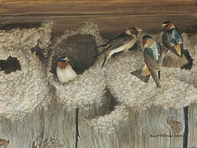 Under Construction – Cliff Swallows- Signed By The Artist – PaperLithograph – Limited Edition – 76A/P – 9x12
