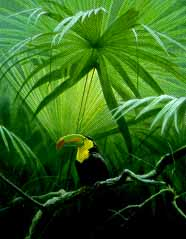 Under The Canopy – Toucan- Signed By The Artist – PaperLithograph – Limited Edition – 950S/N – 18 1/2x14 5/8