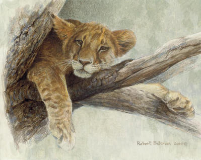 Up A Tree – Lion Cub- Signed By The Artist – PaperLithograph – Limited Edition – 950S/N – 8x10 –