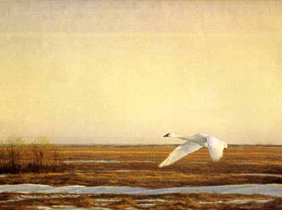 Whistling Swan – Lake Erie- Signed By The Artist								 – Paper Lithograph – Limited Edition – 76 A/P – 23 x 30 5/8 –