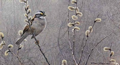 White-Throated Sparrow And Pussy Willow- Signed By The Artist								 – Paper Lithograph – Limited Edition – 950 S/N – 8 5/8 x 15 5/8