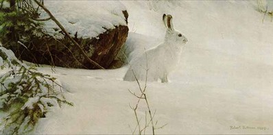 White On White – Snowshoe Hare- Signed By The Artist – PaperLithograph – Limited Edition – 950S/N – 9 3/8x18 7/8