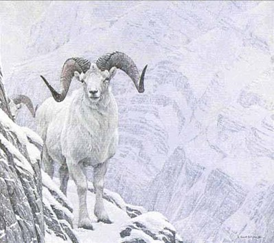 White World – Dall Sheep- Signed By The Artist								 – Paper Lithograph – Limited Edition – 950 S/N – 22 x 19 7/8