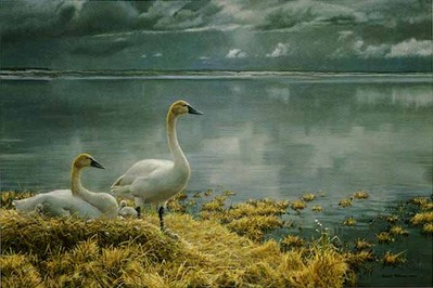 Wide Horizon – Tundra Swans – Companion Edition- Signed By The Artist – PaperLithograph – Limited Edition – 2862S/N – 19 7/8x29 3/8
