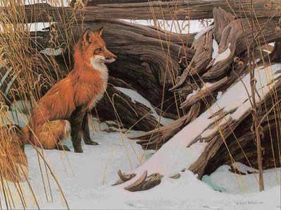 Wily And Wary – Red Fox- Signed By The Artist – PaperLithograph – Limited Edition – 950S/N – 23 1/4x17 1/2