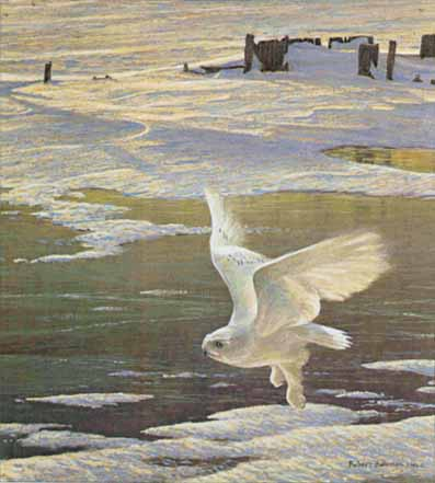 Winged Spirit – Snowy Owl- Signed By The Artist – PaperLithograph – Limited Edition – 950S/N – 7 7/8x6 5/8