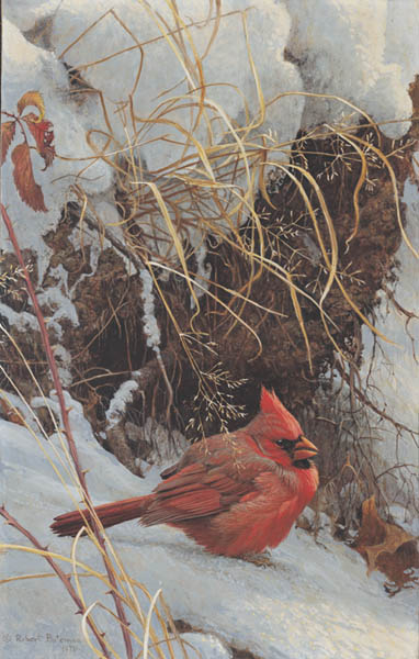 Winter Cardinal- Signed By The Artist – PaperLithograph – Limited Edition – 950S/N – 15 3/4x9 1/2