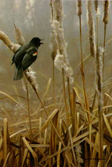 Winter Cattails – Red-Winged Blackbird- Signed By The Artist – PaperLithograph – Limited Edition – 950S/N – 17 5/8x11 3/4