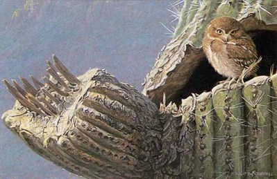 Young Elf Owl – Old Saguaro- Signed By The Artist – PaperLithograph – Limited Edition – 950S/N – 7 1/2x11